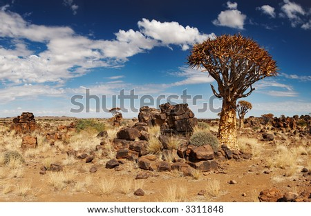 Landscape with quiver trees (Aloe dichotoma), South Namibia - stock photo
