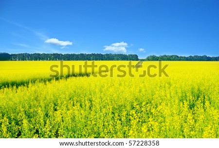 Landscape with rapeseed flowers and blue sky - stock photo