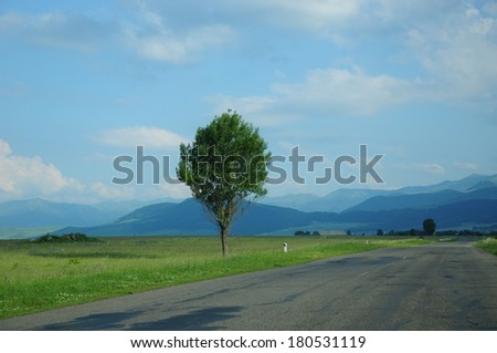 Landscape with road and green tree - stock photo