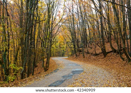 Landscape with road in autumn forest