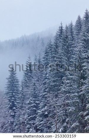 Landscape with snow-covered coniferous forests on the mountains - stock photo