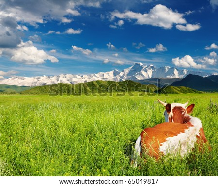 Landscape with snowy mountains, green field and lying cow - stock photo