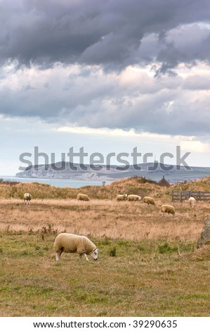 Landscape with some sheeps - stock photo