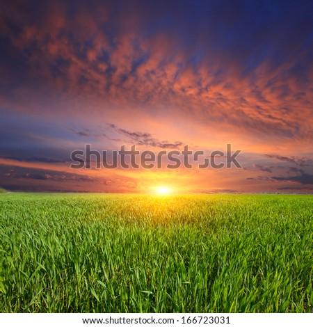 landscape with sunset over green meadow
