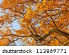 Landscape with the autumn forest. Bright colors of autumn leaves in the park. Lonely beautiful autumn tree. The autumn forest. - stock photo