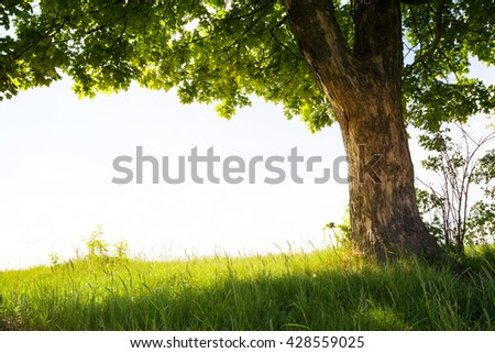 landscape with tree on the field with white sky - stock photo