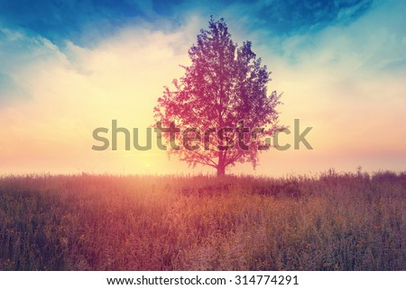Landscape with  tree over sunrise - stock photo