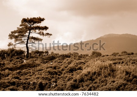 Landscape with tree pine in retro style