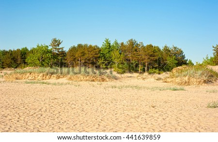 Landscape with trees and sand - stock photo