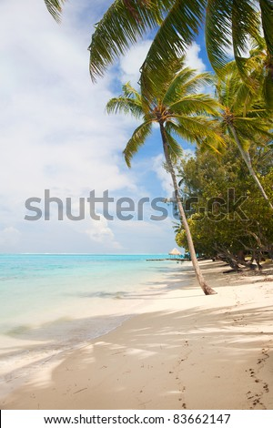 Landscape with tropical beach sea and palm trees