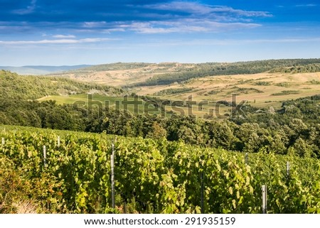 Landscape with vineyard in the hills of Romania - stock photo