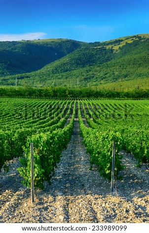 Landscape with vineyard in the mountains  - stock photo