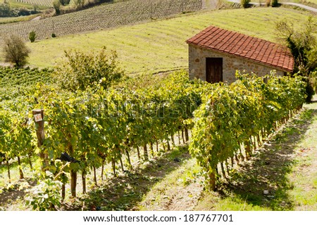 Landscape with vineyards at summer  (Siena, Tuscany, Italy)  - stock photo