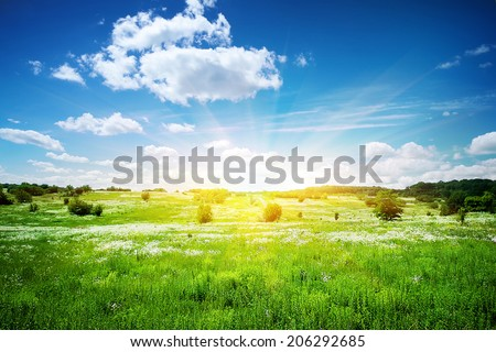 Landscape with white flowers on a green meadow - stock photo