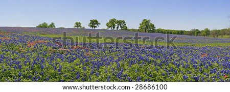 Landscape with wildflowers - bluebonnets and paintbrush - stock photo
