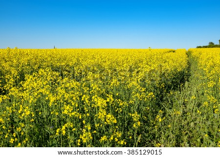 Landscape with yellow flowering rapeseed field. Estonia, Europe - stock photo