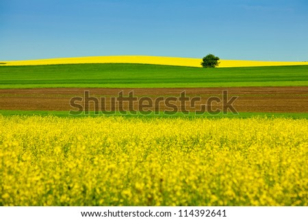Landscape with yellow rapeseed field - stock photo