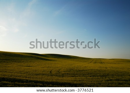 Landscape, yellow canola field with blue sky and low evening sun light - stock photo