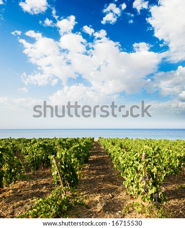 landscaped for vineyard on the sea - stock photo