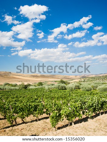 landscaped of vineyard on background of volcano Etna and white clouds - stock photo