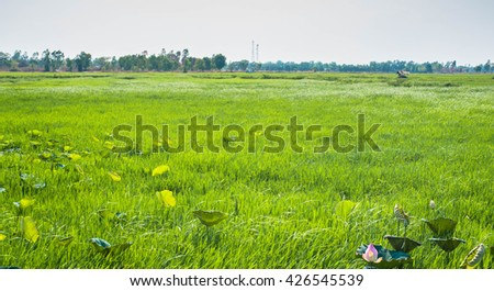 landscapes of sugar cane field - stock photo
