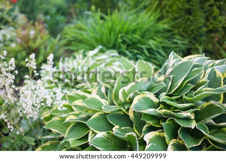 landscaping beds - stock photo