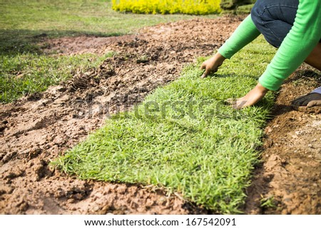 Landscaping lawn - stock photo