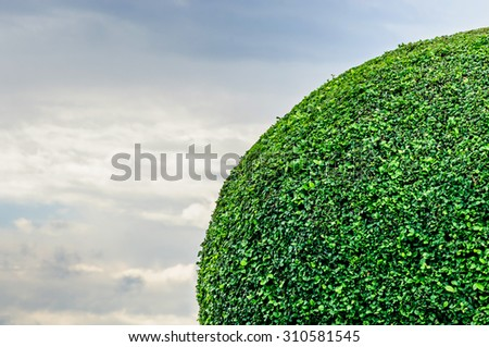 Landscaping trimmed trees in public park, Bangkok, Thailand - stock photo