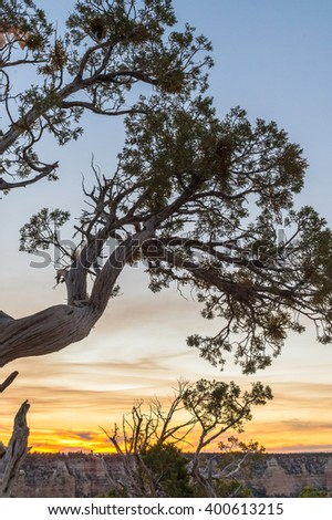 Landscpae with crooked dry tree in the rocky mountain after sunset twillight, Grand Canyon, USA - stock photo