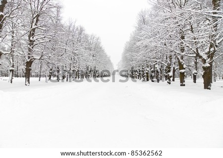 lane at winter snowy park at evening, Pavlovsk, Saint-Petersburg - stock photo
