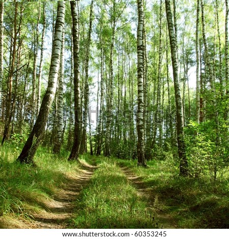 Lane in forest. - stock photo