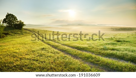 Lane in meadow and sunrise. Nature design. - stock photo