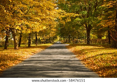 lane in the autumn park - stock photo