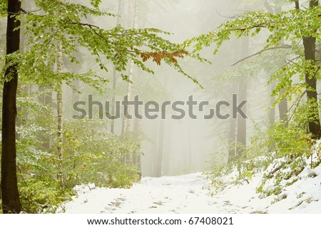 Lane in the misty forest in early autumn with snow lying on the ground. - stock photo