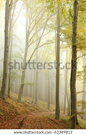 Lane in the picturesque autumnal forest. Photo taken in the mountains of Central Europe.
