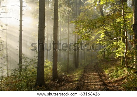 Lane leading through an enchanted forest in the rays of the rising sun. - stock photo