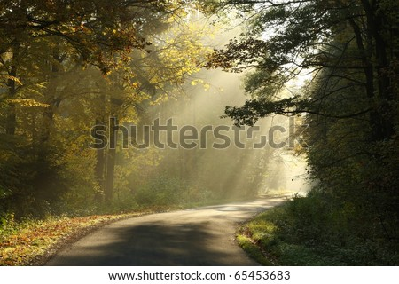 Lane leading through the misty autumn forest at dawn. - stock photo