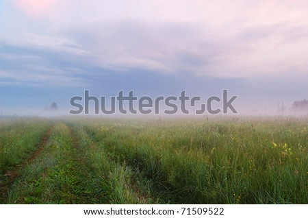 Lane on the morning misty meadow - stock photo