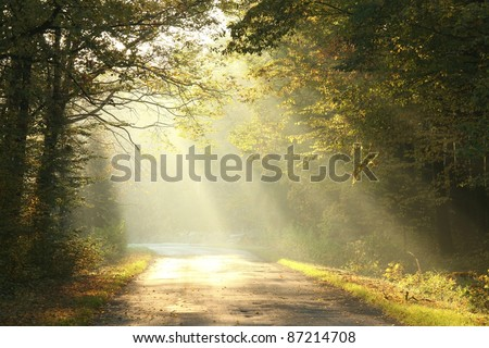 Lane running through the autumn deciduous forest at dawn. - stock photo
