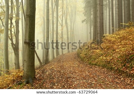Lane running through the mysterious woods on a foggy autumn morning. - stock photo