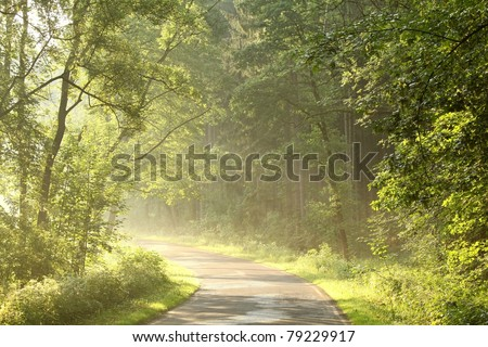 Lane running through the spring deciduous forest at dawn. - stock photo