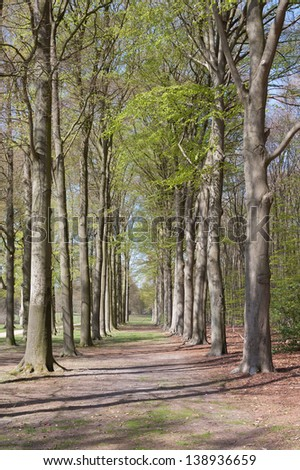 Lane with beech trees at Groeneveld Estate in springtime (Baarn, the Netherlands). Look also for the fall, winter and summer version of this location. Files: 122197468, 122197462 and 157894688 - stock photo
