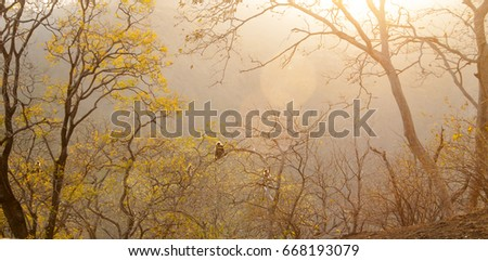Langur on a tree at sunset.