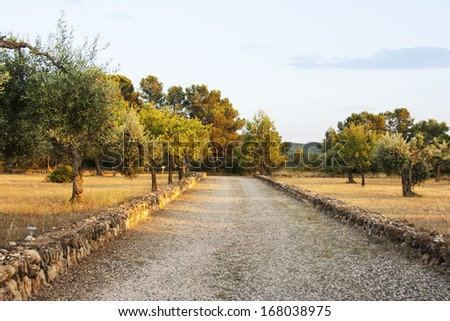 Lanscape with olive and almond trees - stock photo