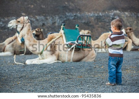 Lanzarote, Canary Islands. Little boy waiting dromedaries for tourist at Timanfaya National Park . A volcanic landscape in background . - stock photo
