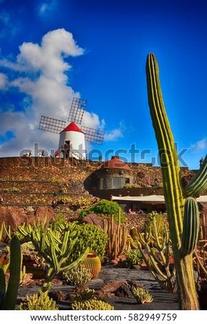 Lanzarote stock images royalty free images vectors for Jardin de cactus lanzarote
