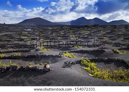 Lanzarote La Geria vineyard on black volcanic soil in Canary Islands  - stock photo