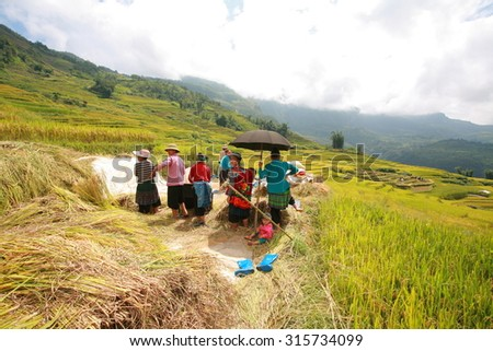 Laocai, vietnam, Sep 11: H'mong (ethnic minority in Northern Vietnam) farmer working in rice terrace on 11/ 09/ 2015 near Sapa,Vietnam. terraces attract a lot of tourists to Vietnam