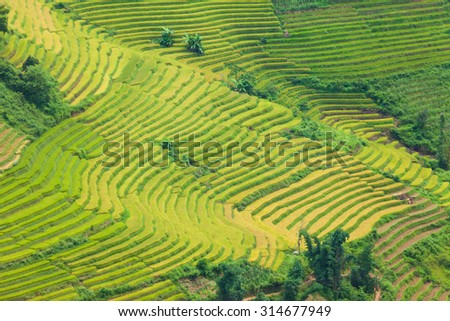 Laocai Vietnam september 6 2015 Vietnam Paddy fields, terraced culture, Sapa, Vietnam