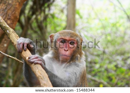 lapburi monkey - stock photo